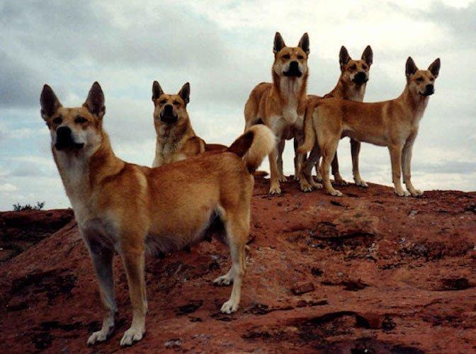 karolina kutya