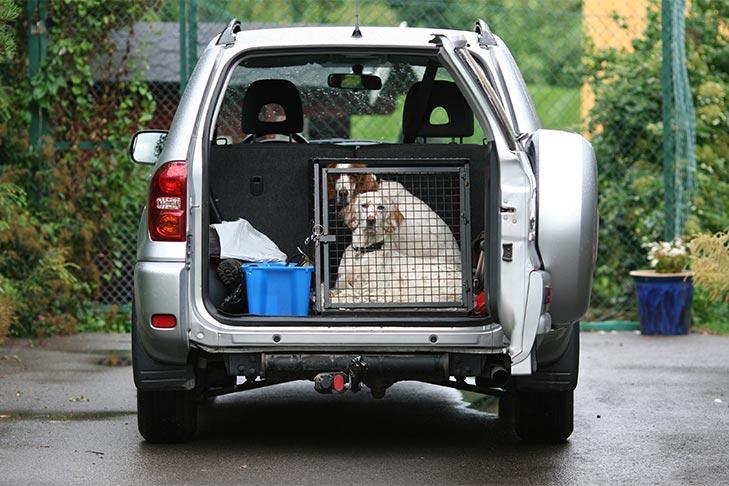 kutya szállítása